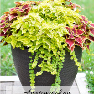 Learn how to make an outdoor planter that will bring beauty, life and interest to your porch or patio all summer long.