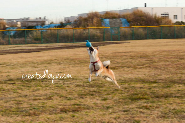 A fenced yard to conveniently let Kona out to do her business and play was a must when looking for a new house. She loves to chase the ball.