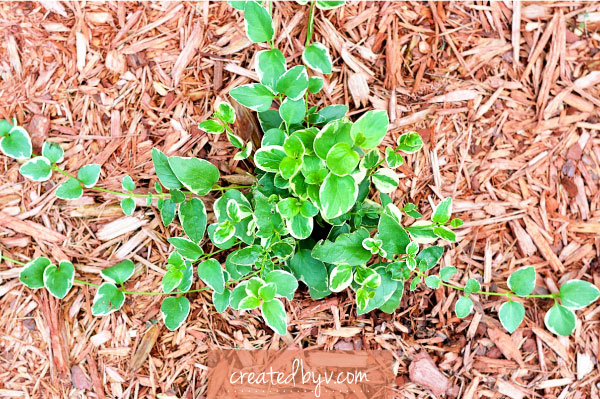 How Does My Garden Grow? - created by v.
